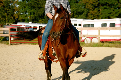 Dakota Stables horse
