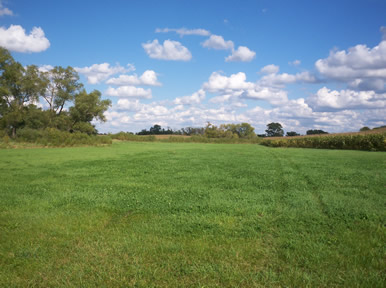 grass pasture for horses in Minnesota