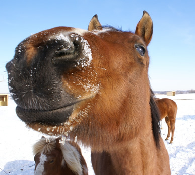 horse with snow on mouth at Dakota Stables