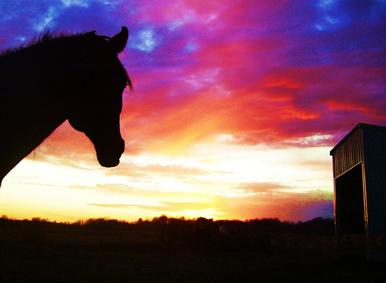 horse sunset at Dakota Stables