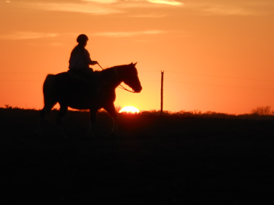 horse and sunset with Dakota Stables